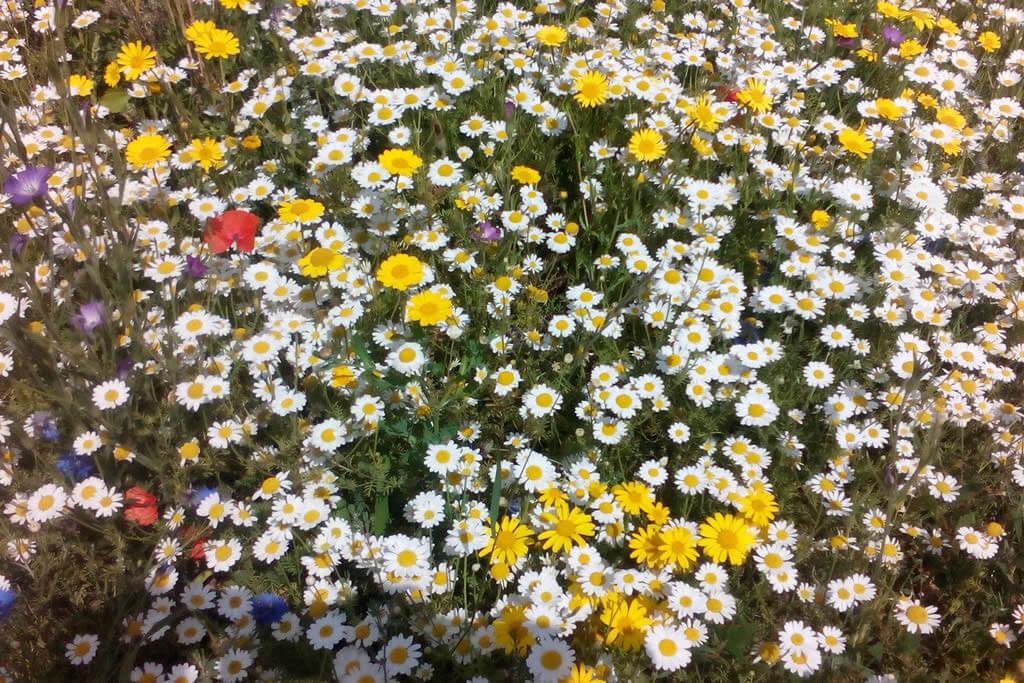 Landscape Creations – Wild Flower Meadow
