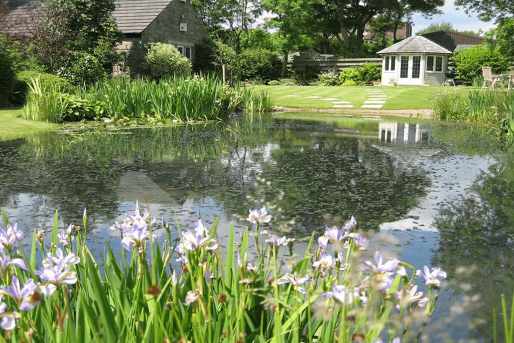 Landscape Creations – Lily Pond 1