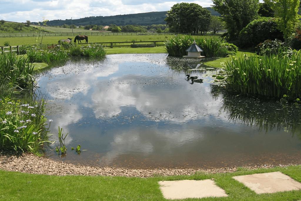 Landscape Creations – Lily Pond 2