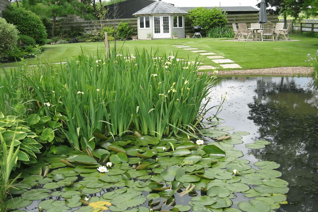 Landscape Creations – Lily Pond 3