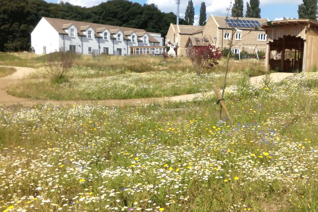Landscape Creations – Wild Flower Meadow 1