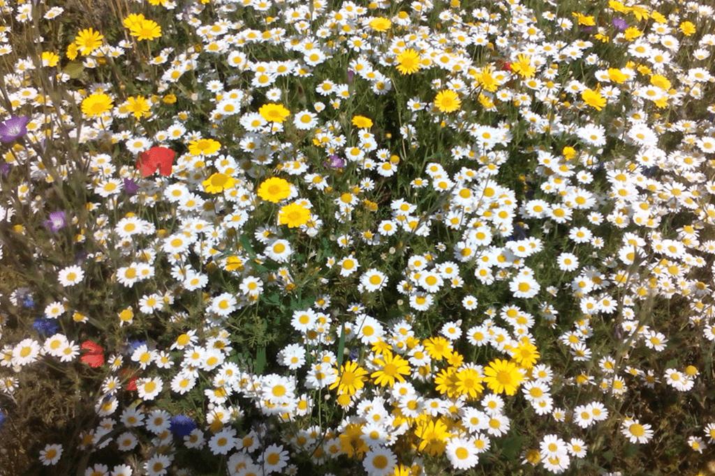 Landscape Creations – Wild Flower Meadow 2